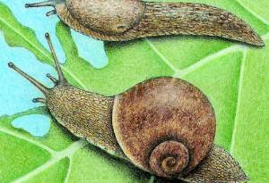 «Народные» способы борьбы с вредителями садовых растений.